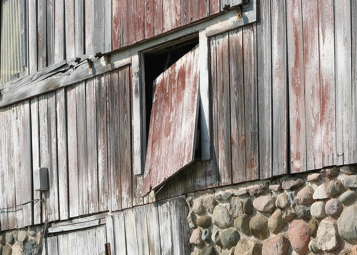 Barn Greeting Card featuring the photograph Who Let The Cow Out by Michelle Shull