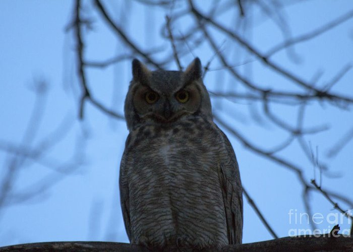 Owl Greeting Card featuring the photograph Who by Scotts Scapes