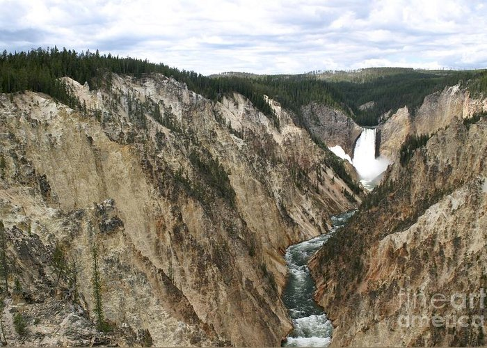 Lower Falls Greeting Card featuring the photograph Wide View Of The Lower Falls In Yellowstone by Living Color Photography Lorraine Lynch