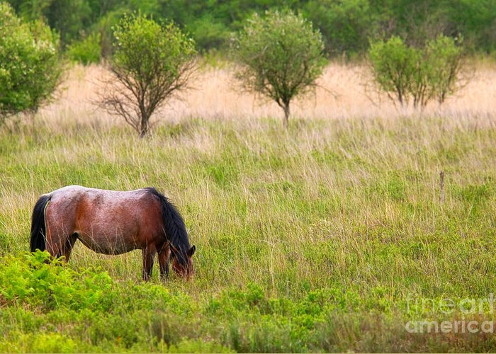 Horse Greeting Card featuring the photograph Wild Horse Grazing by Richard Thomas
