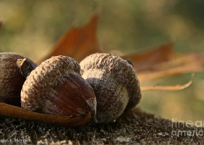 Outdoors Greeting Card featuring the photograph Wild Nuts by Susan Herber