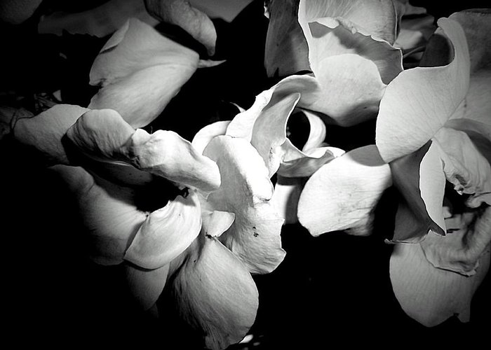 Wild Roses In Black And White Greeting Card featuring the photograph Wild Roses In Black And White by Beth Akerman