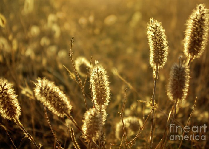 Agricultural Greeting Card featuring the photograph Wild Spikes by Carlos Caetano
