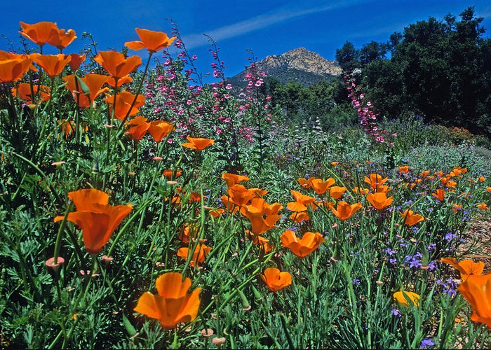 Landscapes Greeting Card featuring the photograph Wildflower Wonderland by Kathy Yates