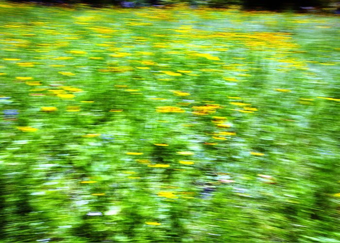 Abstract Greeting Card featuring the photograph Wildflowers And Wind 2 by Skip Nall