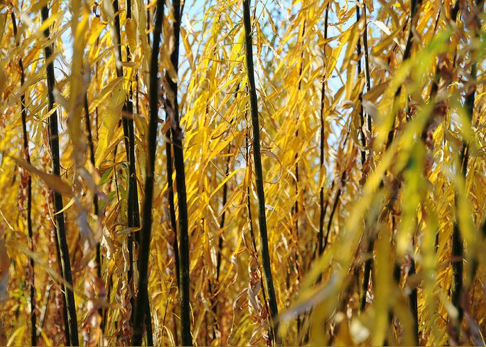 Willow Greeting Card featuring the photograph Willow Curtain by Duncan Nelson