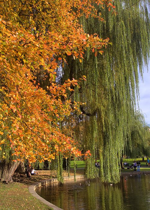 Boston Common Greeting Card featuring the photograph Willow In The Garden by Joann Vitali