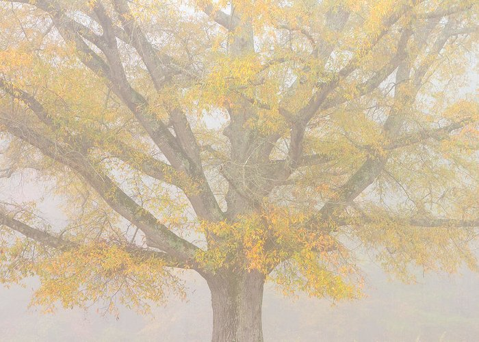 Willow Oak Greeting Card featuring the photograph Willow Oak In Fog by Bill Swindaman