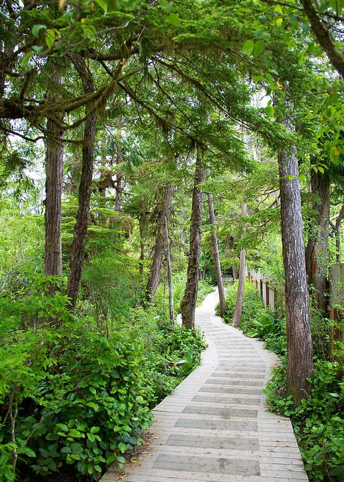 Forest Greeting Card featuring the photograph Winding Path by Ivan SABO