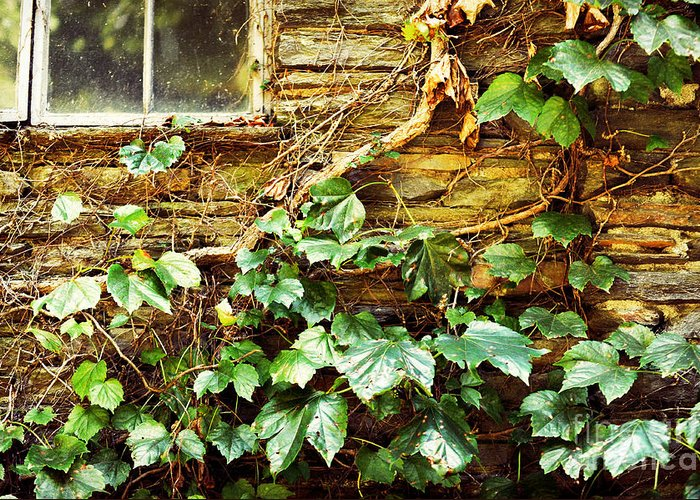 Grapevines Greeting Card featuring the photograph Window And Grapevines by HD Connelly