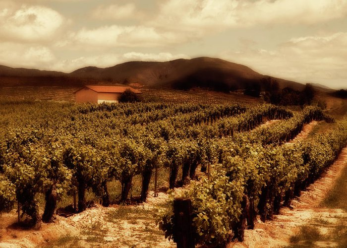 California Greeting Card featuring the photograph Wine Country by Peter Tellone