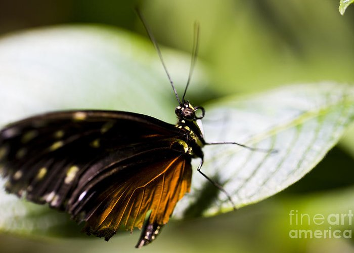 Butterfly Greeting Card featuring the photograph Wings by Leslie Leda