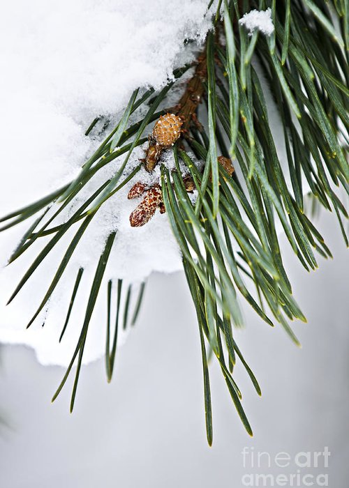 Winter Greeting Card featuring the photograph Winter Branches by Elena Elisseeva
