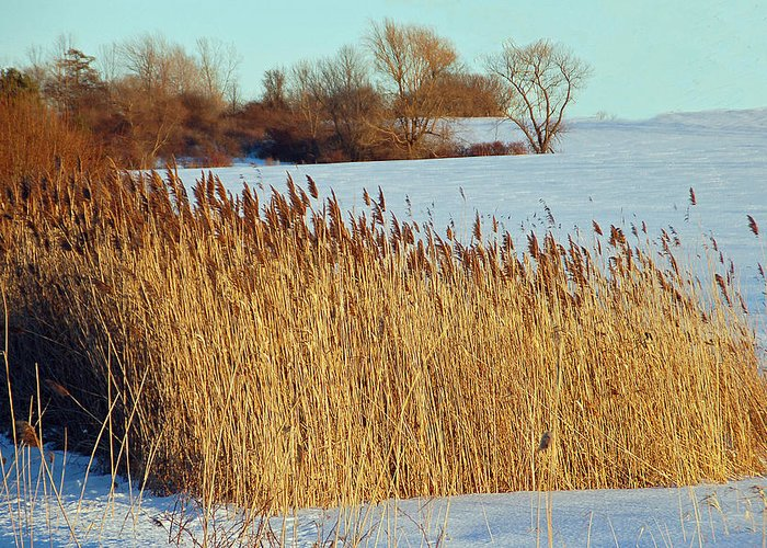 Landscape Greeting Card featuring the photograph Winter Breeze by Aimee L Maher Photography and Art Visit ALMGallerydotcom
