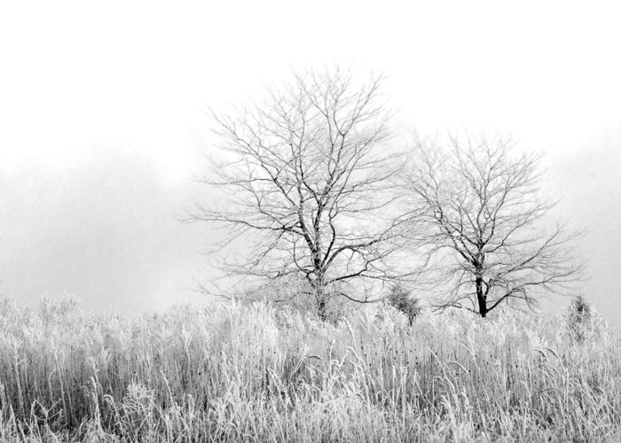 Winter Greeting Card featuring the photograph Winter Day by Julie Palencia