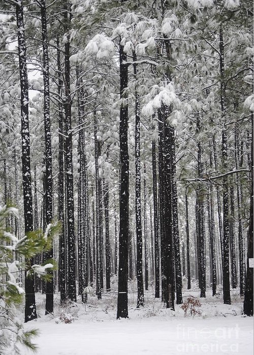 Snow Greeting Card featuring the photograph Winter Forest by Clifton Fomby