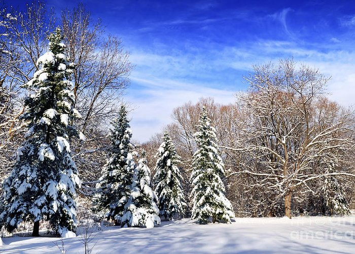 Winter Greeting Card featuring the photograph Winter Forest With Snow by Elena Elisseeva