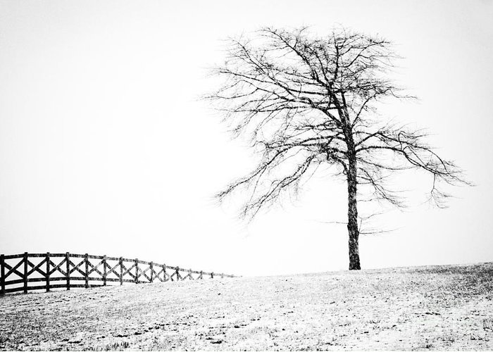 Black And White Landscape Photography Greeting Card featuring the photograph Winter In Black And White by David Waldrop