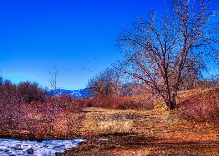 Denver Greeting Card featuring the photograph Winter In South Platte Park by David Patterson