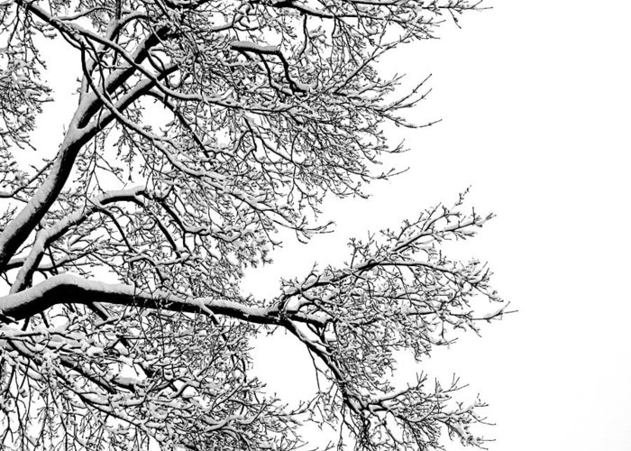 Black Greeting Card featuring the photograph Winter by Jeannette Sheehy