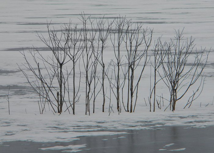 Snow Greeting Card featuring the photograph Winter Marsh by Helen ONeal