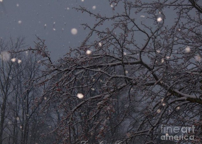 Winter Night Greeting Card featuring the photograph Winter Night by Sacred Muse