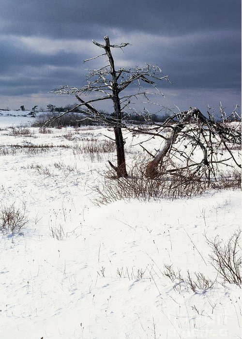 Ice Greeting Card featuring the photograph Winter Shenandoah National Park by Thomas R Fletcher