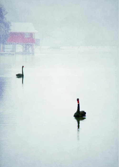 Anatidae Greeting Card featuring the photograph Winter Swans by Darren Fisher
