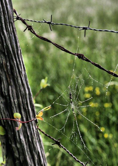 Spiderweb Greeting Card featuring the photograph Wired by JC Findley