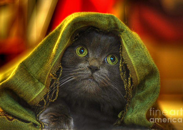 Cat Greeting Card featuring the photograph Wonder by Joann Vitali
