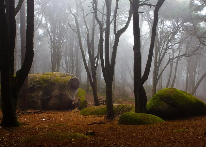 Forest Greeting Card featuring the photograph Wonderland by Jorge Maia