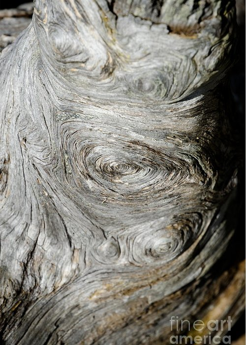 Abstract Greeting Card featuring the photograph Wooden Fingerprint Eddies In The Grain Of An Old Log Like Whorls On A Finger by Andy Smy