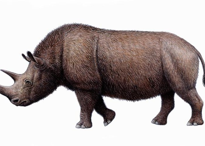 Coelodonta Antiquitatis Greeting Card featuring the photograph Woolly Rhinoceros, Artwork by Mauricio Anton