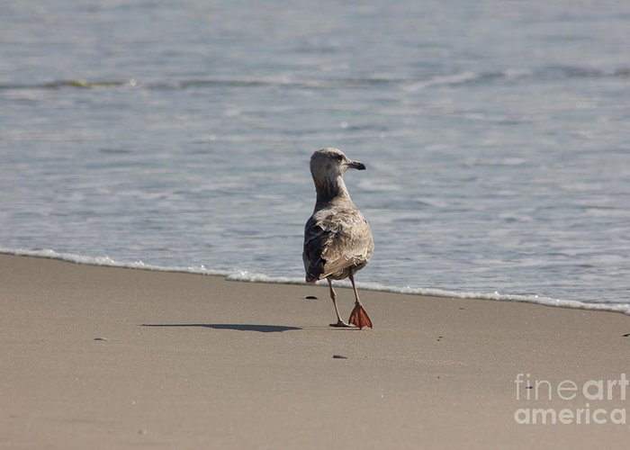 Ocean Greeting Card featuring the photograph Wounded Bird 6 Hurt Tired Calm Ocean Beach Photos Pictures Bird Seagulls Oceanview Beaches Water Sea by Pictures HDR