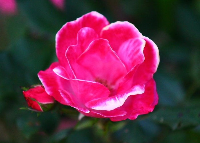 Flower Greeting Card featuring the photograph Wow by Mike Wilber