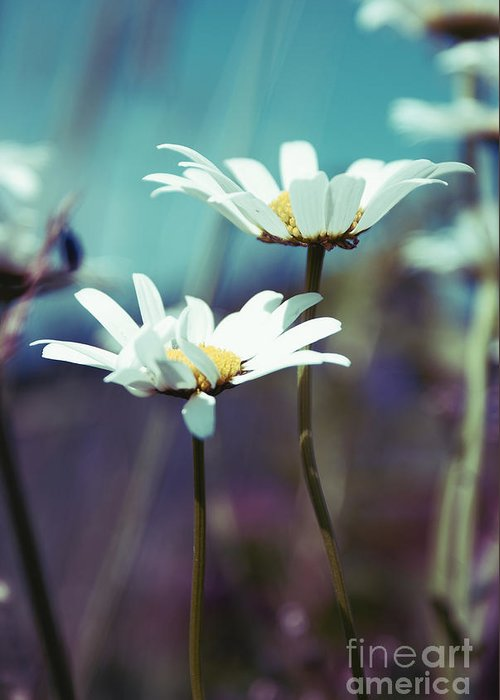 Daisies Greeting Card featuring the photograph Xposed - S02 by Variance Collections