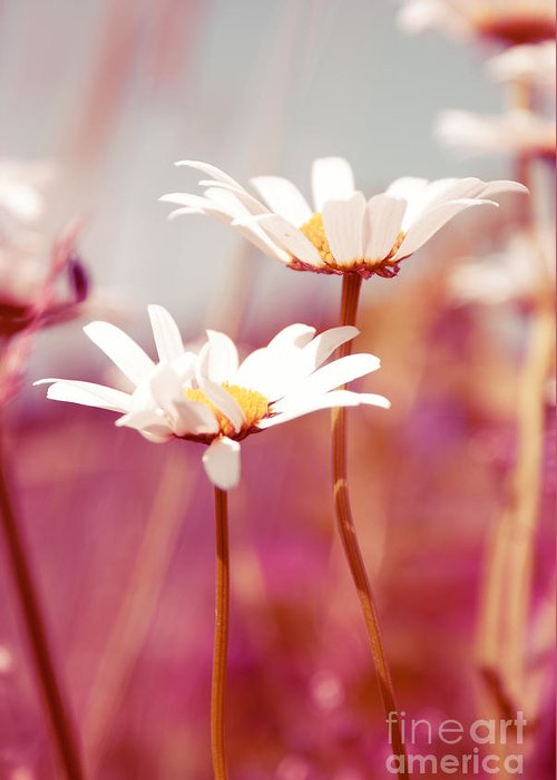 Daisies Greeting Card featuring the photograph Xposed - S03 by Variance Collections