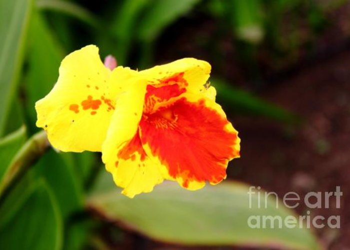 Flower Greeting Card featuring the photograph Yellow by Antonio Gomes