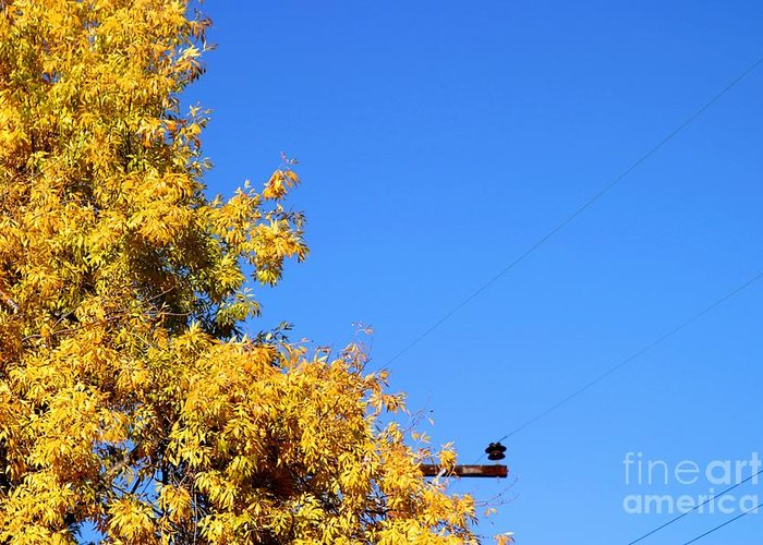 Tree Greeting Card featuring the photograph Yellow Autumn Tree by Henrik Lehnerer