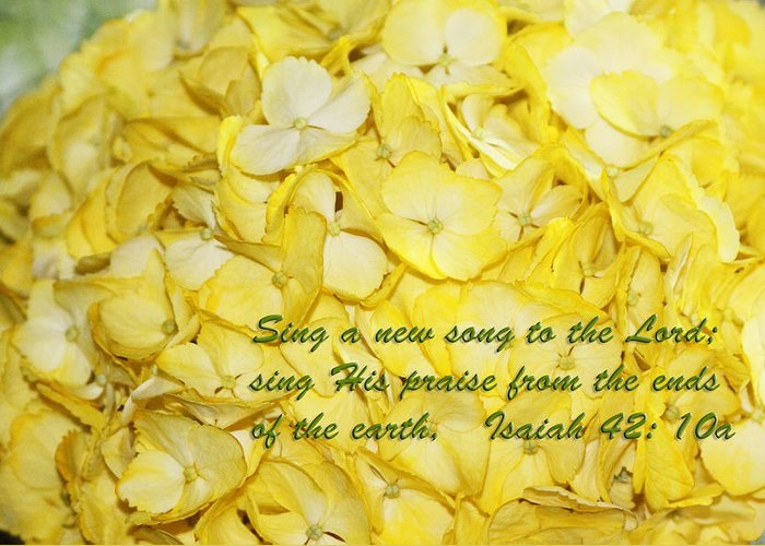 Scripture Greeting Card featuring the photograph Yellow Hydrangea Isaiah 42v10 by Linda Phelps