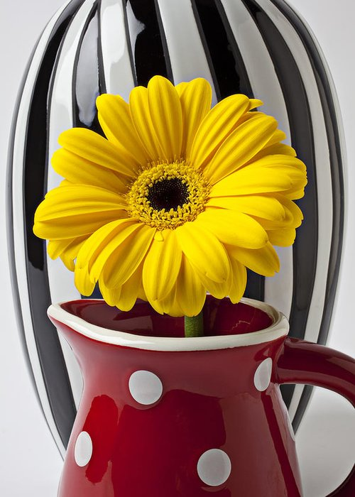 Yellow Mum Pitcher Vase Flower Greeting Card featuring the photograph Yellow Mum In Pitcher by Garry Gay