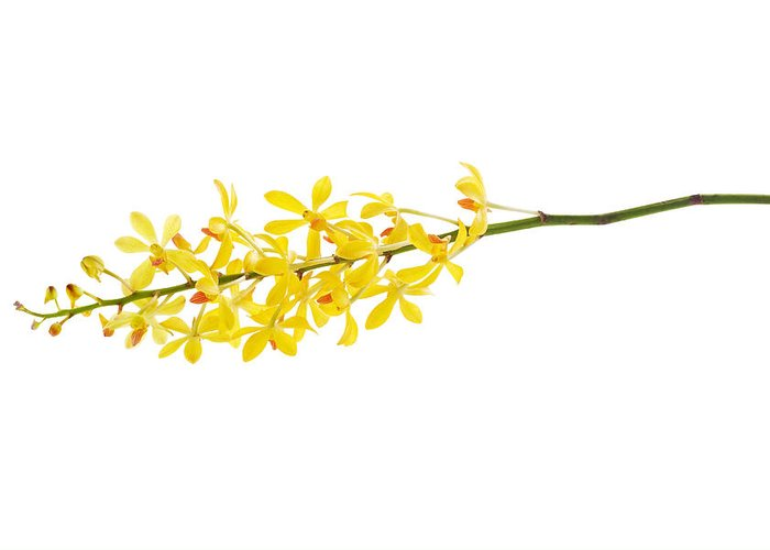 Spa-treatment Greeting Card featuring the photograph Yellow Orchid Bunch by Atiketta Sangasaeng