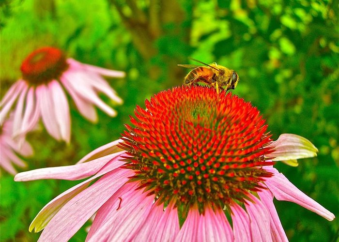 Flowers Greeting Card featuring the photograph You Bee Long To Me by Randy Rosenberger