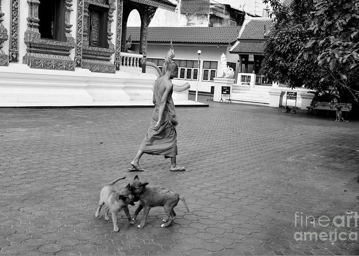 Buddha Greeting Card featuring the photograph Young Dogs by Dean Harte