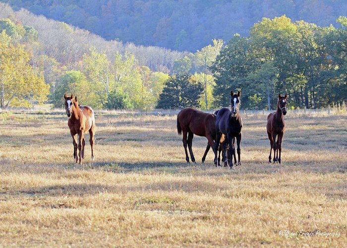Thorougbred Race Horse Greeting Card featuring the photograph 'youngsters In The Paddock' by PJQandFriends Photography