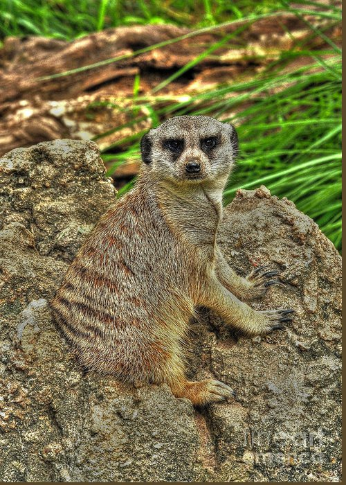 Meerkat Greeting Card featuring the photograph Your Invading My Space by Kathy Baccari