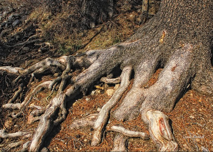 Tree Greeting Card featuring the photograph Your Roots Are Showing by Donna Blackhall
