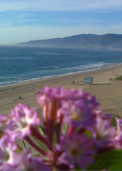 Zuma Beach Wildflower Greeting Card featuring the photograph Zuma Beach Wildflower by Douglass Reynolds
