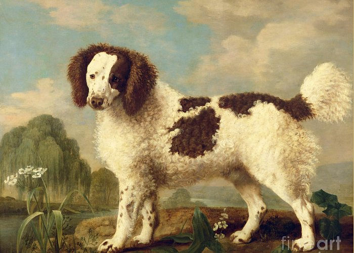 Brown Greeting Card featuring the painting Brown And White Norfolk Or Water Spaniel by George Stubbs