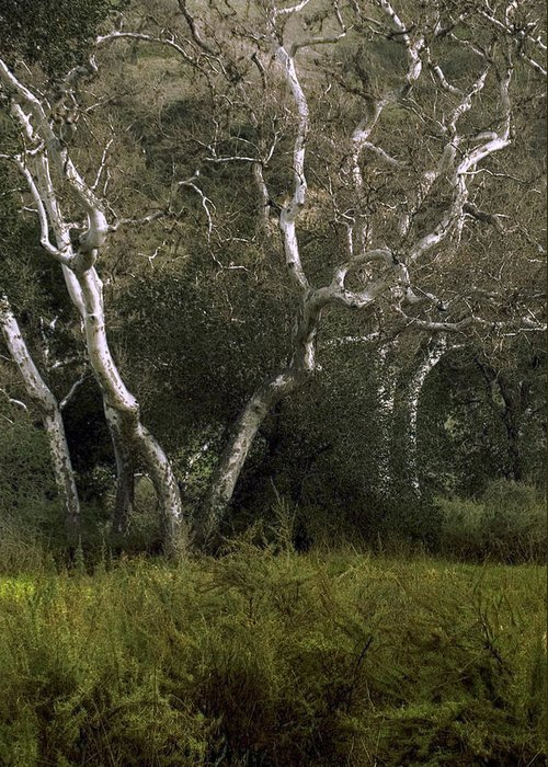 Tree Greeting Card featuring the photograph Dv Creek Trees by Karen W Meyer